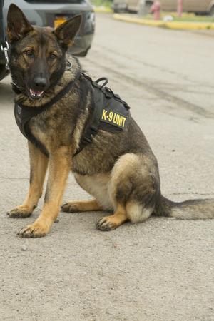 k 9: US Navy K-9 German Shepherd providing security during Fleet Week