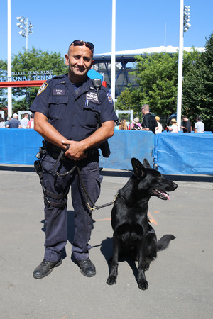 k9: NEW YORK - SEPTEMBER 5, 2015: NYPD transit bureau K-9 police officer and German Shepherd K-9 providing security at National Tennis Center during US Open 2015 in New York
