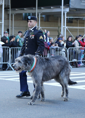 st  patrick s day: NEW YORK - MARCH 17, 2016: United States Army Ranger with Irish Wolfhound marching at the St. Patrick s Day Parade in New York. Editorial