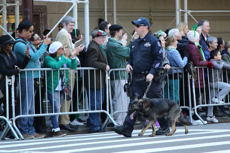 NEW YORK - MARCH 17, 2016: NYPD transit bureau K-9 police officer with K-9 dog providing security during St. Patrick s Day Parade in New York.