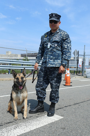 k9: NEW YORK - MAY 26, 2016: Unidentified US Navy with K-9 dog providing security during Fleet Week 2016 in New York