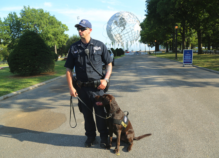 k9: NEW YORK - SEPTEMBER 8, 2106: NYPD transit bureau K-9 police officer and K-9 dog providing security at National Tennis Center during US Open 2016 in New York
