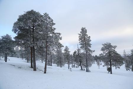 Beautiful winter landscape in Finnish Lapland