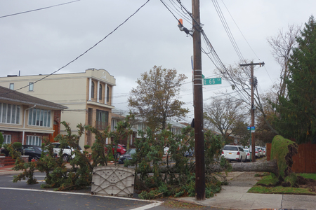 BROOKLYN, NEW YORK - OCTOBER 30, 2012: Fallen tree damaged house in the aftermath of Hurricane Sandy in Brooklyn, New York