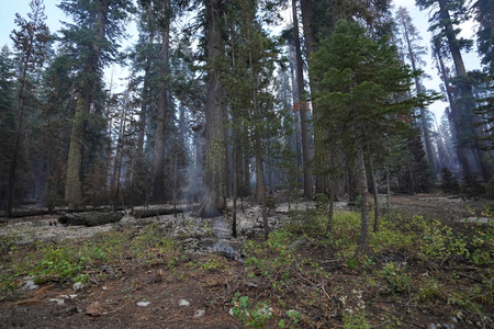 Forest wildfire in California