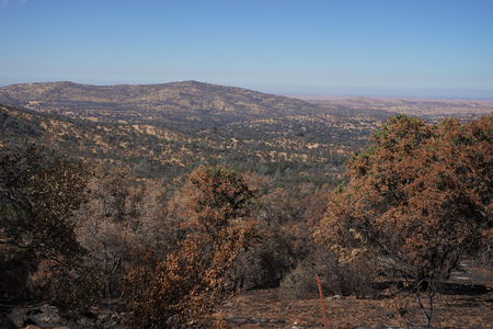 Dry burnt California hillside charred and devastated by a forest wildfire