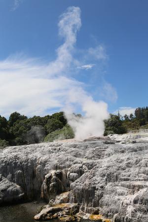 Pohutu Geyser in Te Puia National Park, Rotorua, New Zealand
