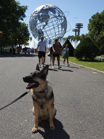 NEW YORK - AUGUST 29, 2019: NYPD transit bureau K-9 dog provides security at National Tennis Center during 2019 US Open in New York