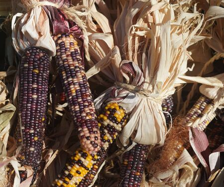 Colorful dried Indian Corn