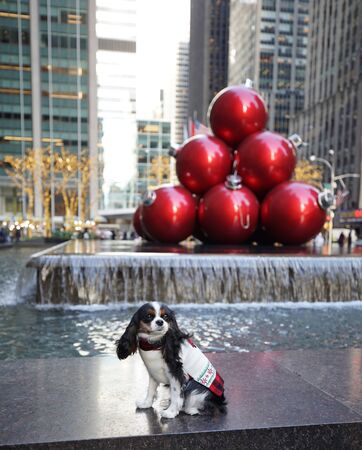 Cute dog in front of Christmas decorations during Holidays Season in Manhattan