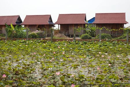Lotus farm and typical houses in Cambodia Stock Photo
