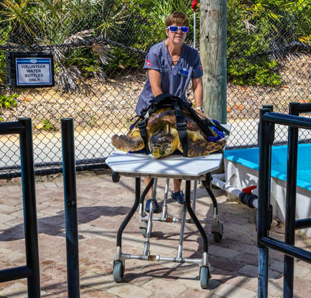JUNO BEACH, FLORIDA - MARCH 28, 2019:  Loggerhead Marinelife Center in Florida.  It is a sea turtle research, rehabilitation, education and conservation center