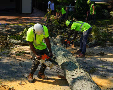 BROOKLYN, NEW YORK - AUGUST 9, 2020: New York City Parks crew works to remove a fallen tree and clears street the aftermath of severe weather as tropical storm Isaias hits New York City Editorial