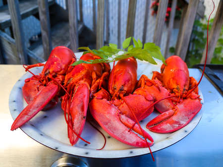 Boiled lobsters on a plate