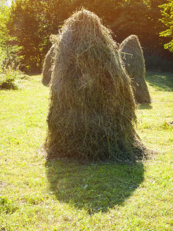 small field: Haystack dries in the middle of a small field. Stock Photo