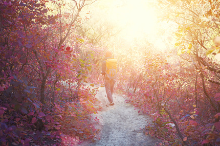 autumn road: The girl with the backpack goes on the trail in a beautiful forest.