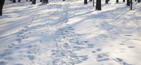 huellas de animales: Pistas animales en la nieve fresca en el bosque. Foto de archivo