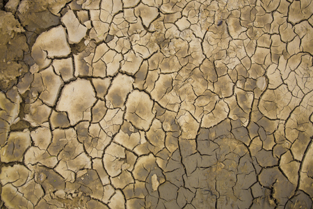 mire: Land in the desert after the drought begins to revive. Stock Photo