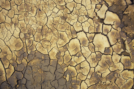 revive: Land in the desert after the drought begins to revive. Stock Photo