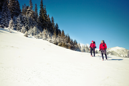 Two climbers with backpacks and snowshoes are on the snow in the mountains in winter in a background of beautiful spruce forest.