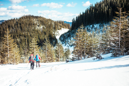 snowshoes: Two climbers are in the mountains in the winter against snow-covered fir trees, climbing two men with backpacks. Stock Photo