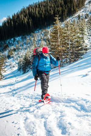 Climber with a backpack, trekking poles and snowshoes is on the snow in the winter mountains on the background of spruce forest.