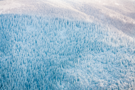 Forest in the mountains in winter. Beautiful fir forest. Mountain landscape. Snow-covered coniferous trees.