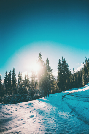 Two women in a winter hike. Girlfriends with trekking poles are on a snow-covered mountain path. Girls with backpacks and snowshoes travel together. Friends walk on a sunny day through the fir forest. Standard-Bild - 115854570