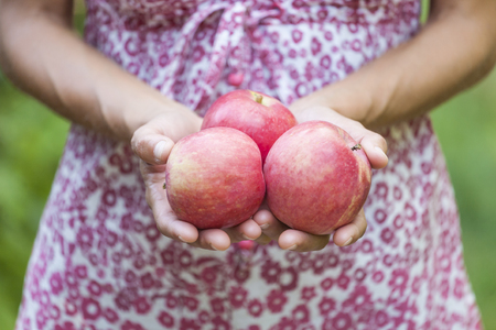 A woman is holding apples. Girl in dress harvests in the garden. Red ripe fruit in female hands. Proper nutrition. Standard-Bild - 115854905