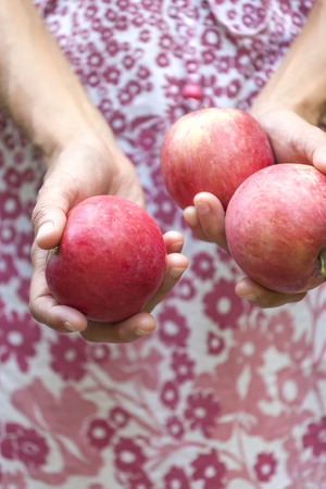 A woman is holding apples. Girl in dress harvests in the garden. Red ripe fruit in female hands. Proper nutrition. Standard-Bild - 115854926
