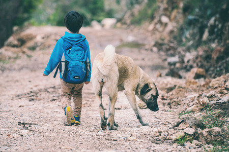 A boy with a backpack walks with the dog through the park. The child is petting the dog. Shepherd goes with its owner in the woods. Friendship pet and child. 스톡 콘텐츠