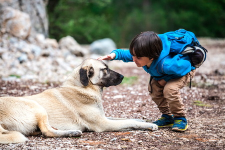 A boy with a backpack walks with the dog through the park. The child is petting the dog. Shepherd goes with its owner in the woods. Friendship pet and child. Foto de archivo