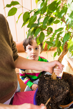 Replanting potted plant. A woman teaches a boy to work with houseplants. The child plants flowers. Replanting indoor flower in a new pot.