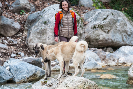 A woman walks with two Caucasian Shepherd dogs in the forest. A girl with a backpack crosses the river. Brunette walking a dog. Training pets. Companion for travel. Imagens