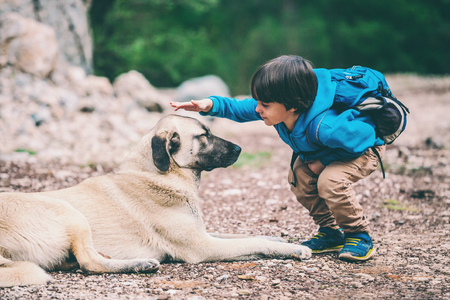 A boy with a backpack walks with the dog through the park. The child is petting the dog. Shepherd goes with its owner in the woods. Friendship pet and child.