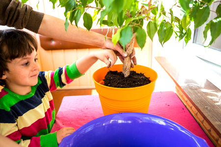 Replanting home flowers. The boy helps his mother to plant plants in a pot. A child learns to care for indoor plants. Woman teaches son to work with houseplants. Imagens