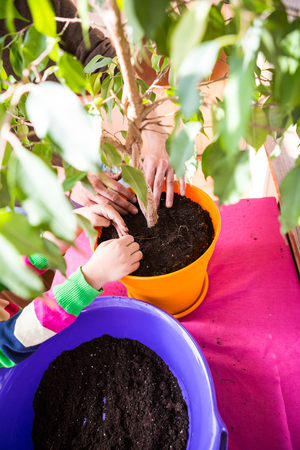 Replanting Plants