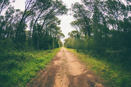 Dirt road in the forest. Deciduous forest. Trees against a cloudy sky. Trail in the park. The way forward. Stock fotó
