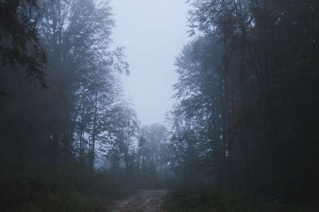 Fog in the forest, mountain forest during the autumn rain.