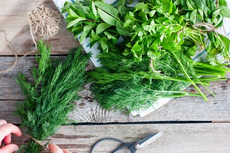 Female hands collect fresh dill greens on a wooden table next to other fragrant fresh herbs in a bunch, top view Stok Fotoğraf