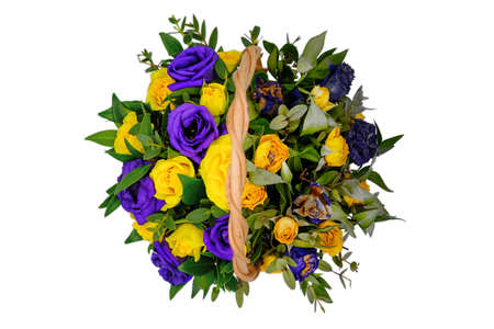 A bouquet of blooming roses and the dead. The process of decay of all living things. Fresh and withered plants. Top view of the blue and yellow flowers in the basket. Isolate on white background.