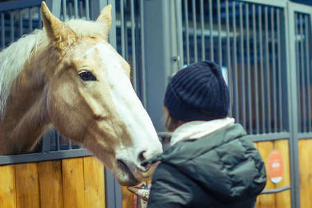A woman feeds a horse in the paddock with her hand. Winter stable horses