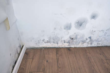 Moldy wallpaper and baseboard in the house due to water leakage