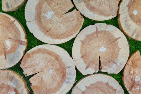 Background of stumps of felled trees 版權商用圖片