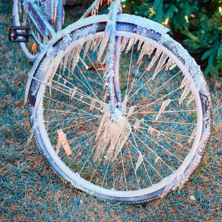 Bicycle wheel frozen on the background of a christmas tree with a garland, new year Banco de Imagens