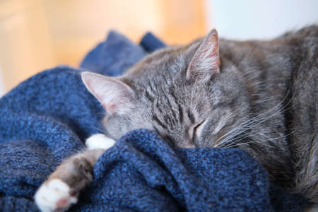 Pet sleeps on a man clothes, blue knitted sweater on the bed