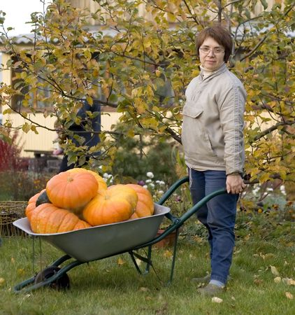 autumn in the garden, woman in grey jacket and jeans wheel a barrow full of pumpkins. She look to a viewer and smile. There is an apple tree and a house on background. photo