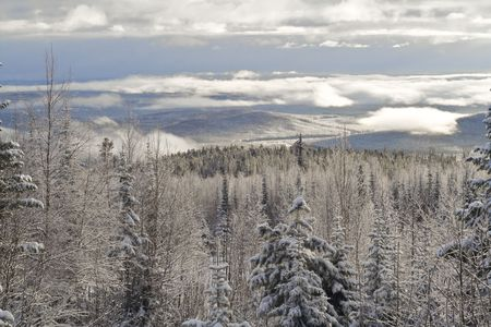view from the mountain on a forest after snowfall photo