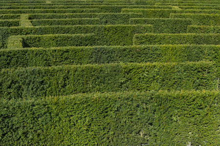 Green bushes labyrinth, hedge maze in the park