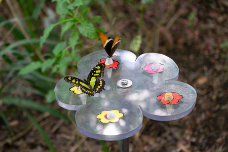 Colorful butterflies are eating nectar. The concept of insects and humans